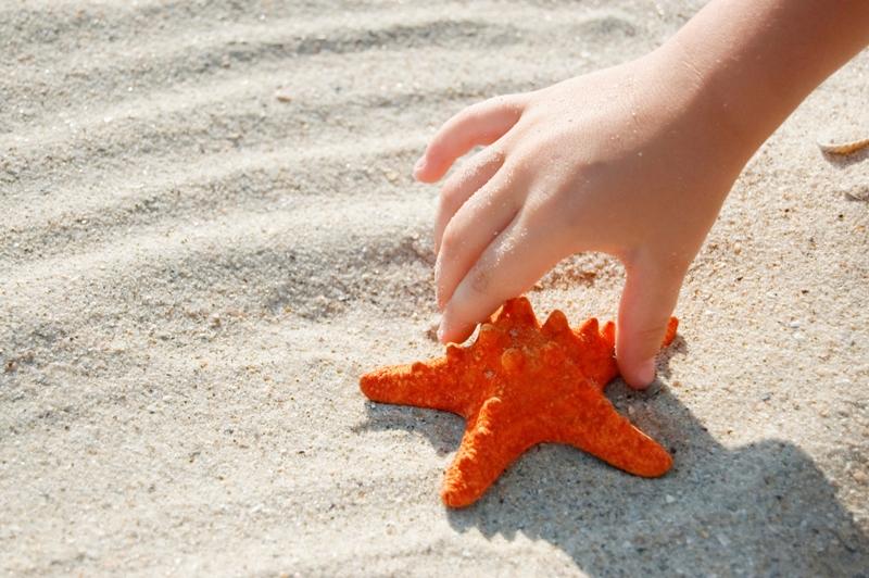 red starfish in child hand